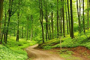Herrliche Naturlandschaft für Nordic Walking im Bayerischen Wald
